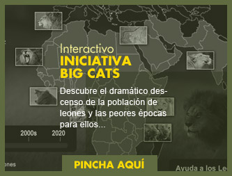 Interactivo Iniciativa Big Cats
